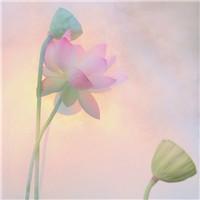 春暖花�_心情愉快 清新唯美花朵