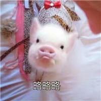 qq皮肤包_这组表情包 超级适合猪年用_个性头像