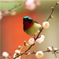 仿若画中物 一组彩羽翠鸟飞鸟头像